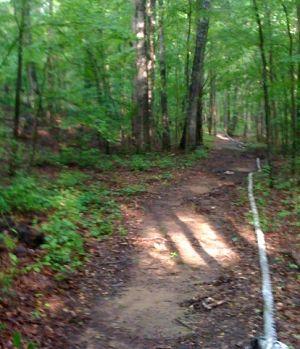 Rose Creek Village woods