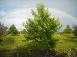 rainbow in Selmer, TN