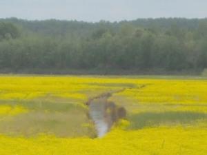Field near Selmer, Tn