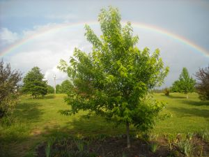 rainbow in Selmer, TN