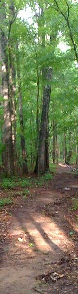 Woods at Rose Creek Village