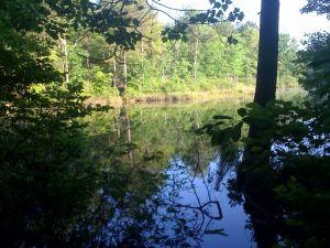 pond in Selmer, TN