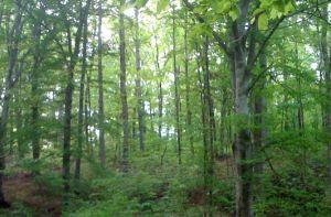 Selmer, Tennessee woods